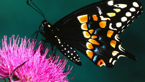Full HD Beautiful Butterfly Pics Free Download