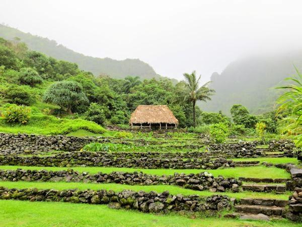 A GUIDE TO NORTHEASTERN GARDENING: Limahuli Garden and Preserve, Kauai