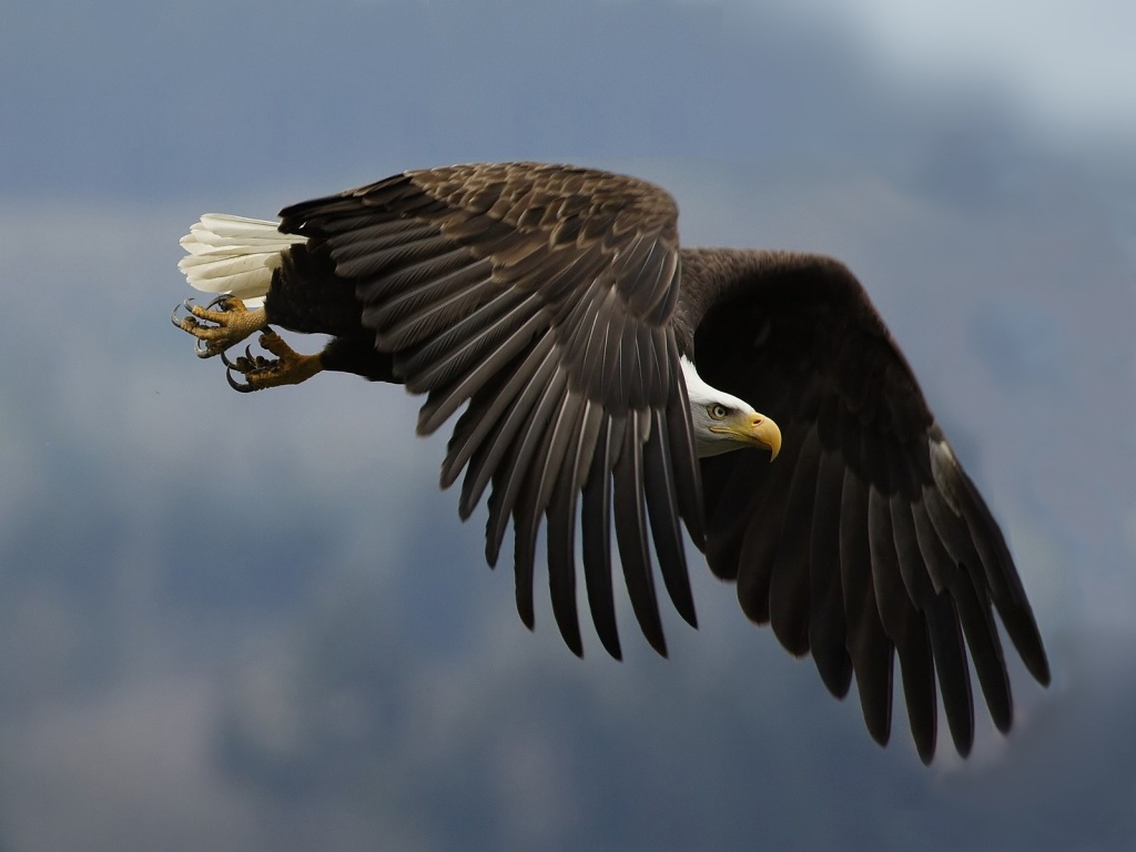 Amazing Wild Life Photography Birds Desktop Wallpapers 6