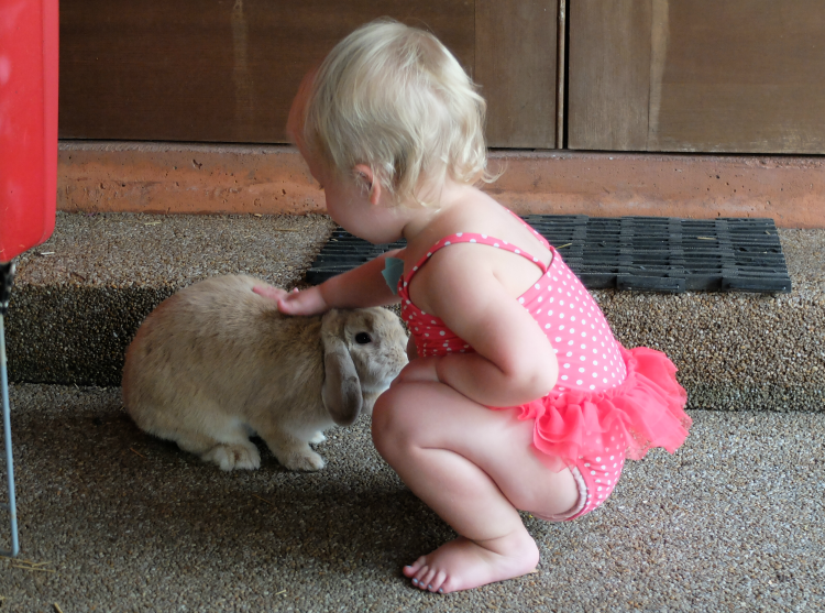 Toddler petting the bunny