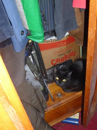Black cat hiding in wardrobe