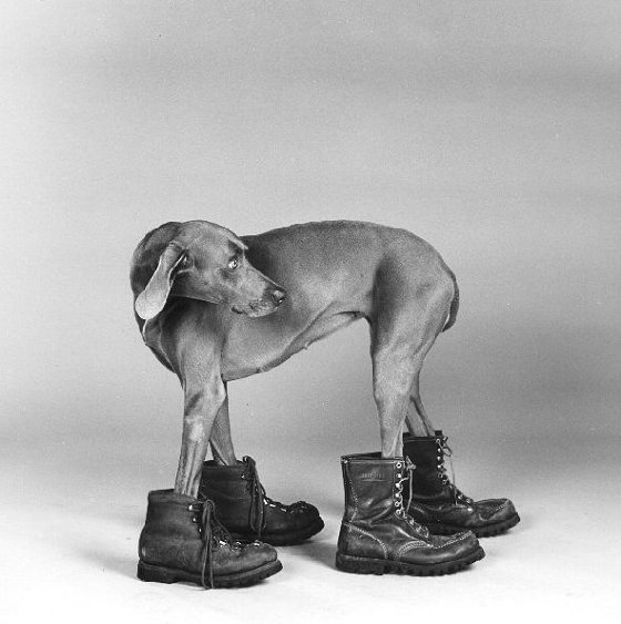That Little Art Teacher: Wag Your Tail for William Wegman