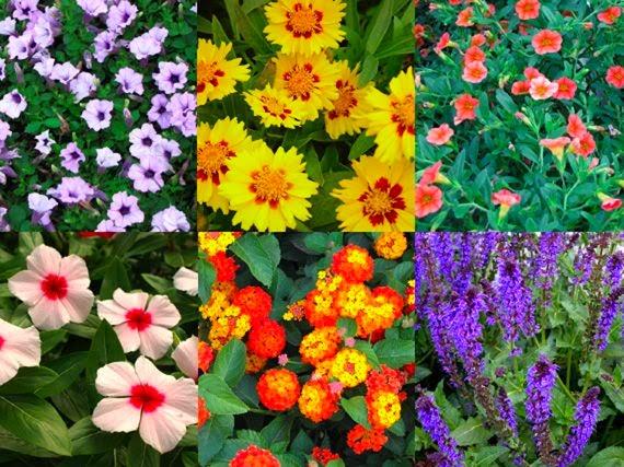 Garden sopelana mundo verde jardinarium plantas vivaces - Plantas de exterior con flor ...