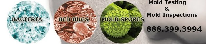Mold Inspection & Testing