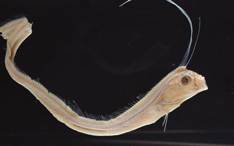 young-girl-mature-dragon-fish-pantyhose-spread-shots