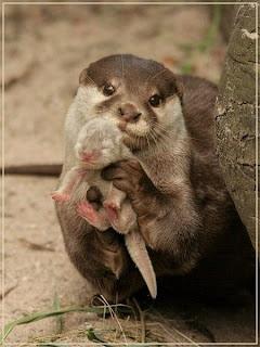 mãe lontra e lontrinha