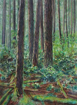 Old Growth Forests In Watercolor