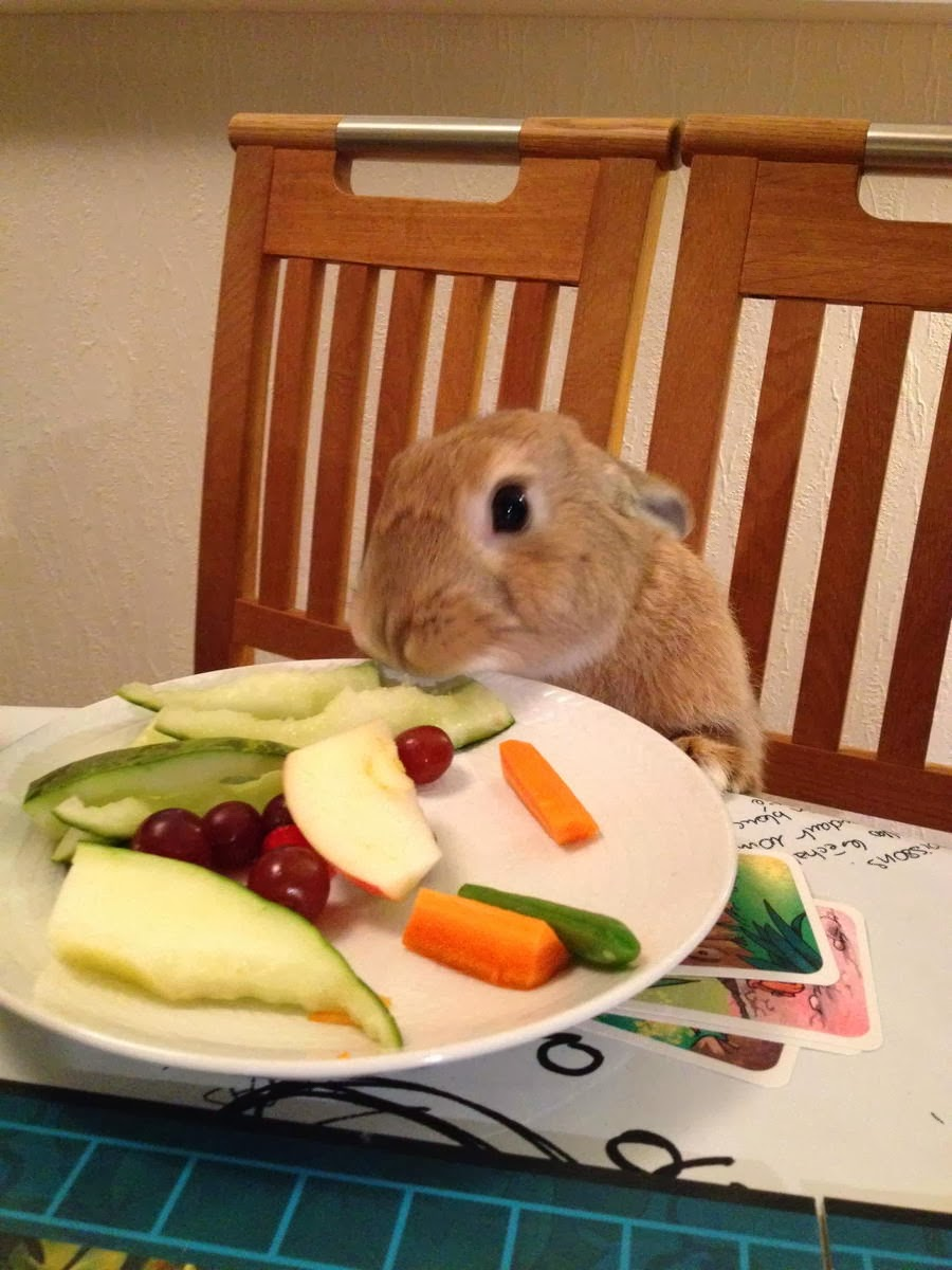 Funny animals of the week - 31 January 2014 (40 pics), bunny eats vegetables on plate on the table