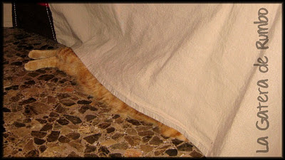 Ojos que no ven... ¡Gato escondido!