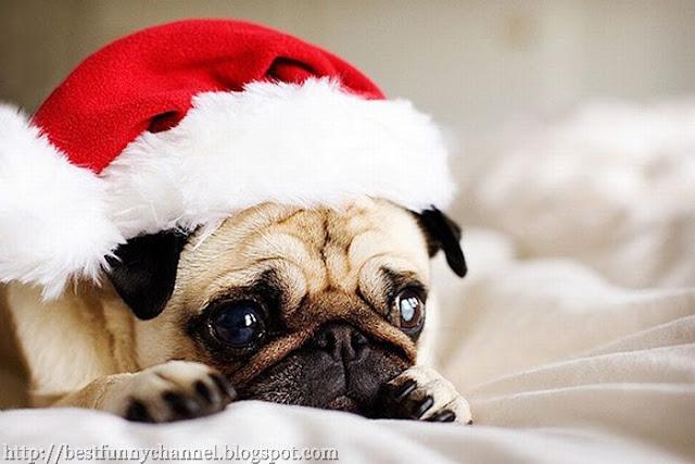 Cute puppy in a Christmas cap