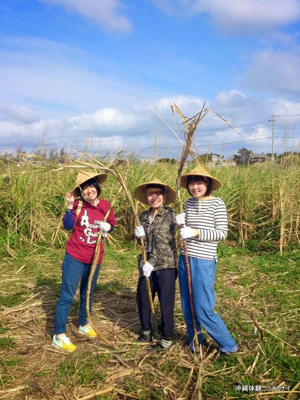 沖縄体験/観光卒業旅行でサトウキビ刈りから黒糖作り