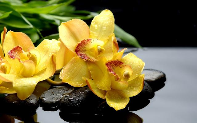 Hermosas Fotos de Flores Amarillas - Imágenes de Flores en HD