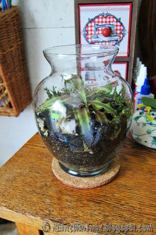 Terrarium in Craft Room