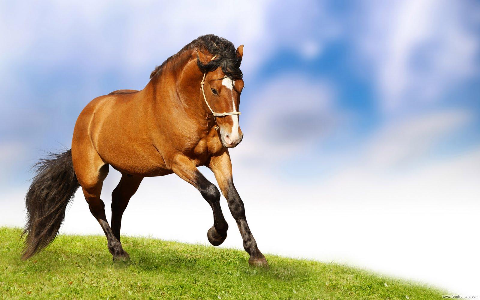http://2.bp.blogspot.com/-pmJNrFXmpxQ/TocQGnuB7eI/AAAAAAAADM0/c78KuC1pC18/s1600/Beautiful+horses+photos+35.jpg