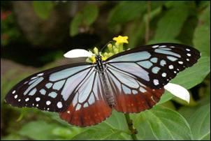 Palavras. O caçador de borboletas