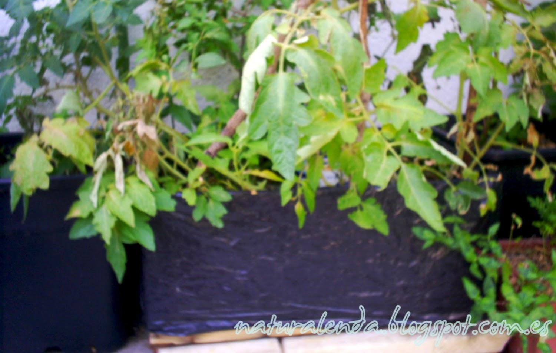 caja de cebollas con tomates