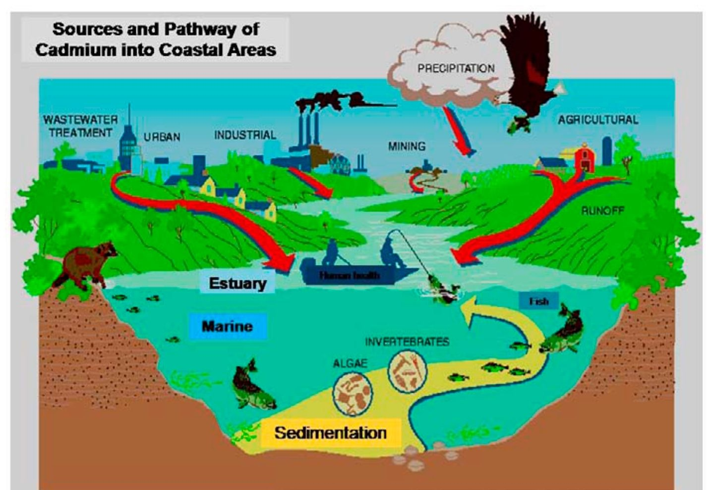 bioaccumulation and biomagnification minamata disease essay While we don't agree with 100% of the choices they deem low mercury this article still contains some good info on mercury contamination and fish.