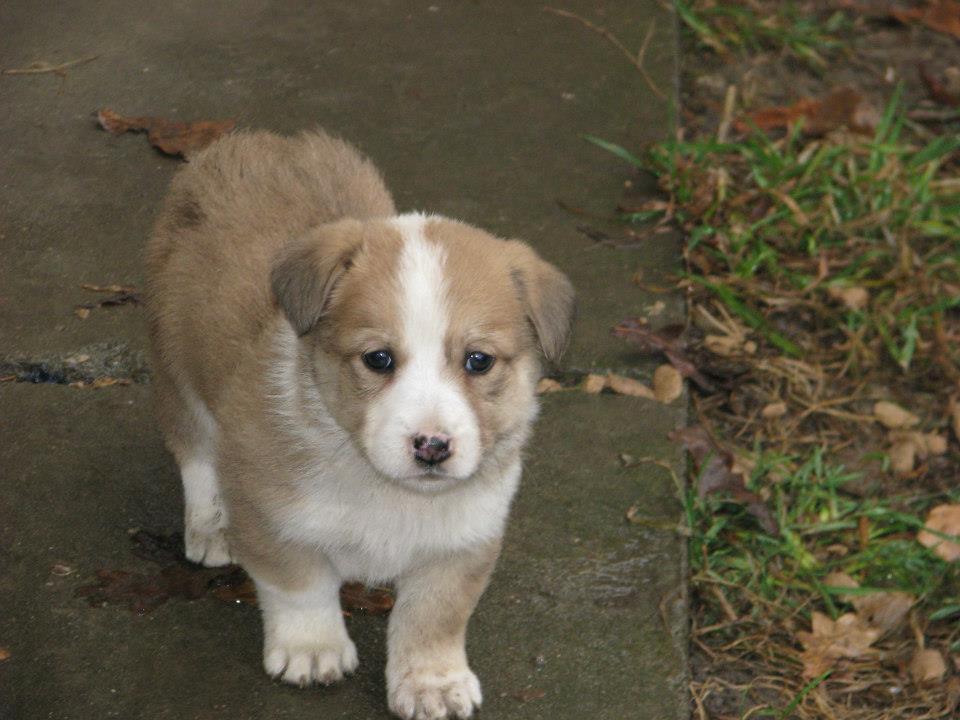 Dogs Needing Homes From Romanina