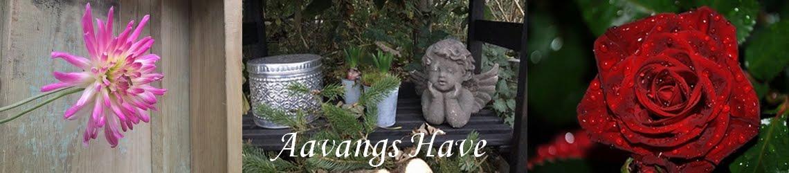 Aavangs have