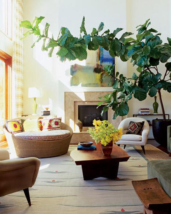 My 2 Favorite Indoor Plants Emily Henderson