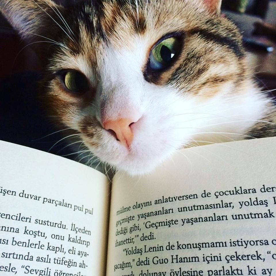 Kedinin okuyanını ve çapulcusunu daha çok severim :-)