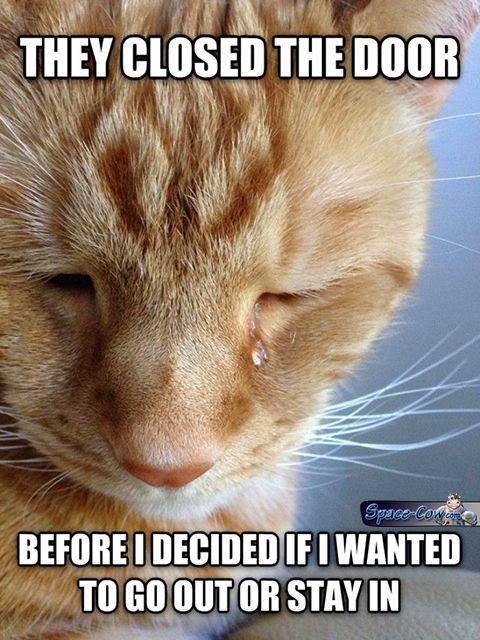 funny sad cat picture