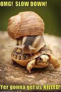 OMG please slow down!