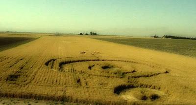 circulo en los campos de trigo junio 2012 en iran