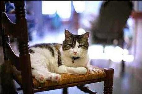 Chú mèo tên Oscar, trong vòng 5 năm qua Oscar dự báo chuẩn xác 50 trường hợp tử vong và được mệnh danh là thần chết.