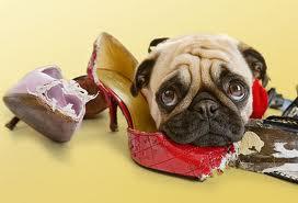 socialização de cães