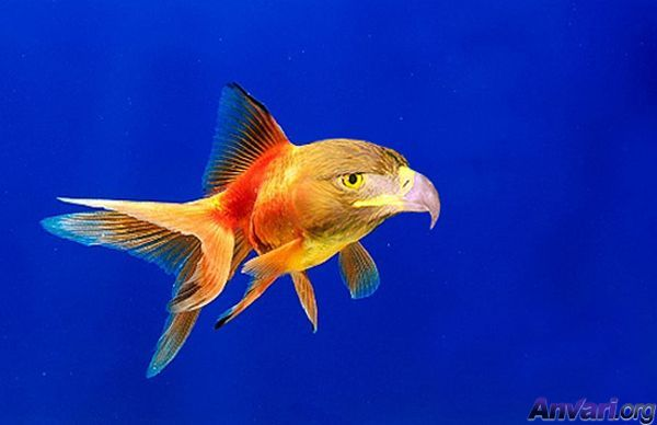 Most funny fishes new photographs funny and cute animals for Nourriture poisson rouge voile de chine