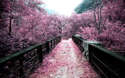Caminos del Edén - Puentes del Paraíso