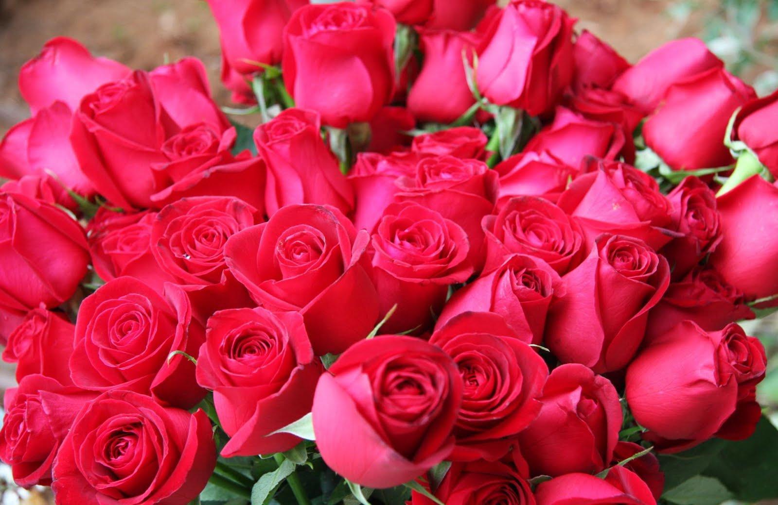 http://2.bp.blogspot.com/-pp9j4-BtLsE/UNDb5YQuOzI/AAAAAAABF7A/FrJBtBcXc50/s1600/bm-image-761640.jpeg