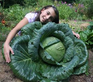 Plants That Respond Well to Bucket Irrigation & Fertigation...