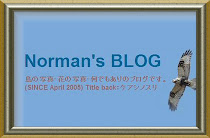 Norman's BLOG