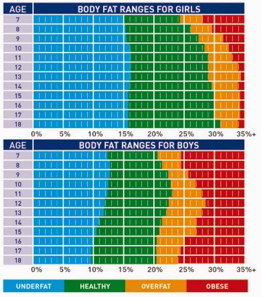 fat percentage chart