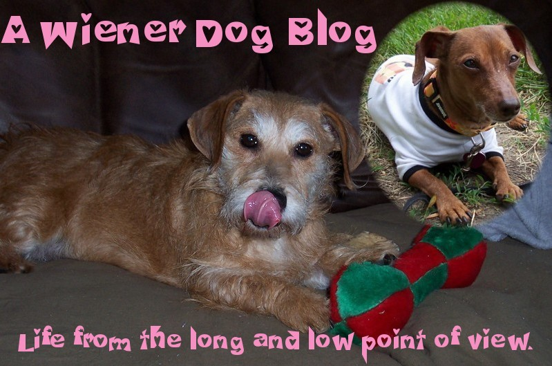 A Wiener Dog Blog