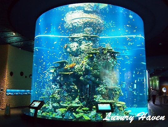 resort world sentosa sea aquarium fish tank