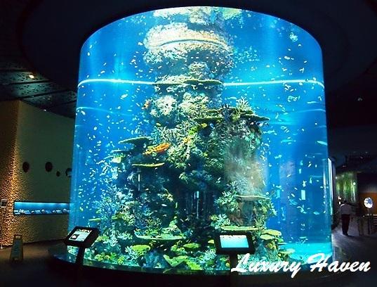 resort world sentosa sea aquarium fish tank