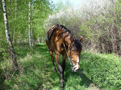 konie, jazda konna, strata przyjaciela, śmierć konia