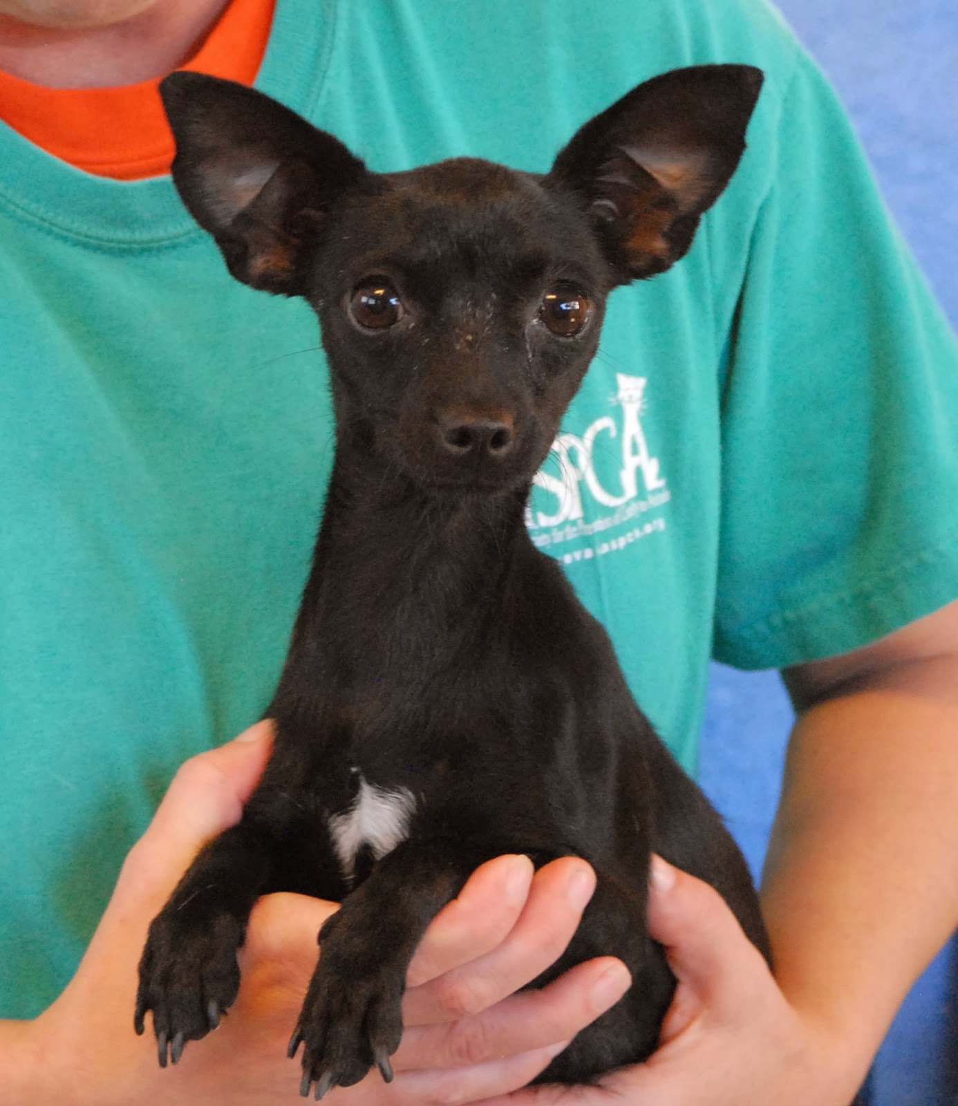 Adoption: Nevada SPCA Animal Rescue: Janis's Puppies Debut For