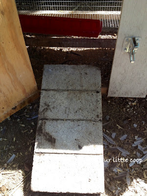 Access back into quail house, backyard, urban, coturnix, house