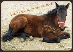 BERKENYE