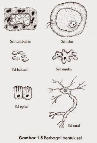 Berbagai bentuk sel