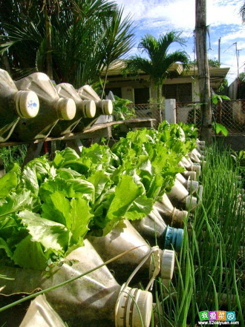 Bottle garden idea, gardening ideas for small gardens