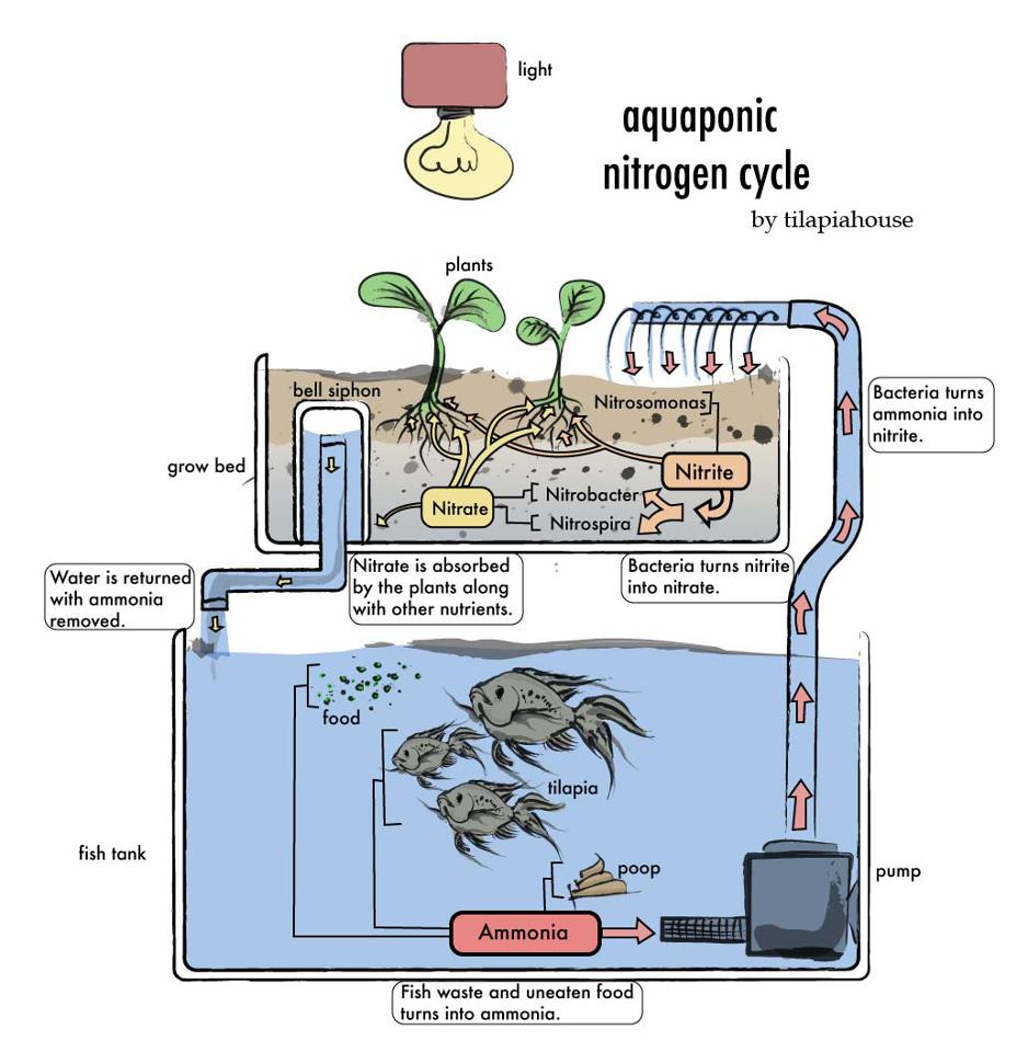 Fish Tank Aquaponics System