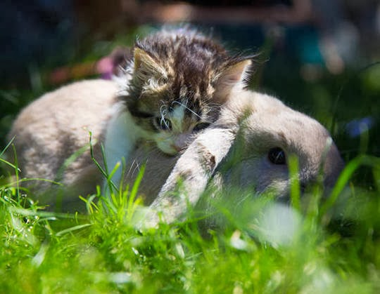 cat and rabbit friends