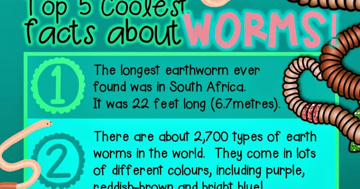 Green grubs garden club top 5 coolest facts about worms for 5 facts about soil