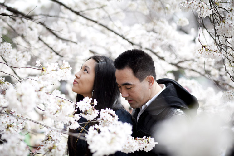 During cherry blossom season, the flowers were in full bloom for this engagement photoshoot in Tokyo, Shinjuku.