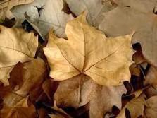 Folhas secas........